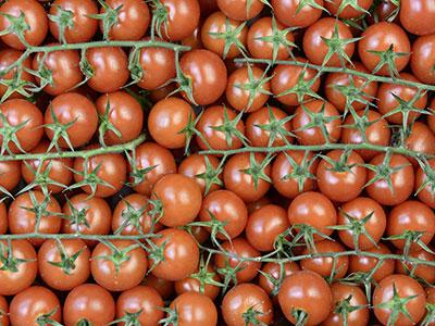 Bratigny tomates - Omer Decugis MIN Rungis