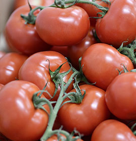 Bratigny tomates - Omer Decugis