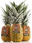 Ananas par avion Terrasol Don Ed's - SIIM - Omer Decugis