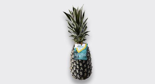 Ananas Pain de Sucre bio Dibra - SIIM - Omer Decugis