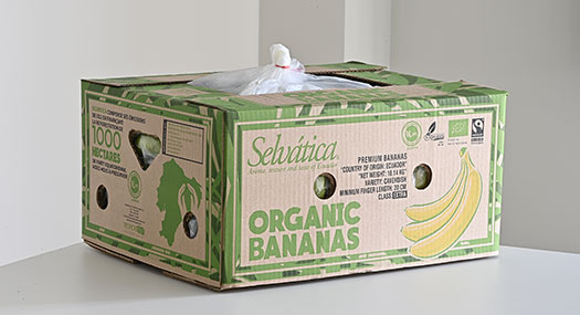 Banane Selvatica bio Fair Trade - Omer Decugis