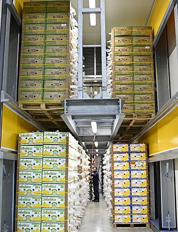 Chambre de murissage bananes Omer Decugis