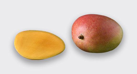 Mangue Dibra Afrique de l'Ouest - Omer Decugis