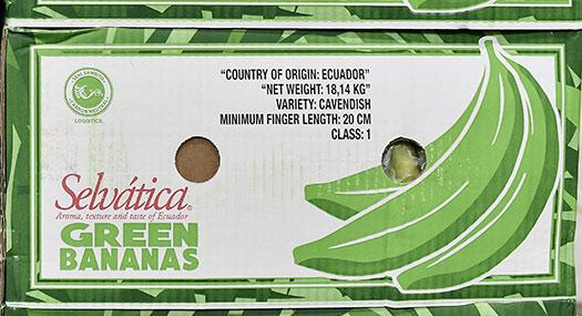 Banane Selvatica Green - Omer Decugis