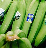 Banane Selvatica - Omer Decugis