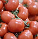 Tomates Bratigny - Omer Decugis