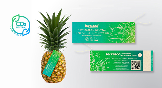 Carbon neutral pineapple Terrasol SIIM
