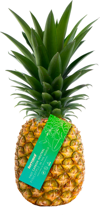 SIIM Terrasol : world's first carbon neutral pineapple
