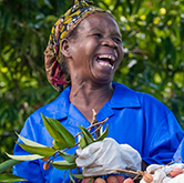 Litchi Madagascar Faitrade : une aide aux producteurs malgaches