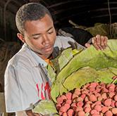 Litchi Madagascar Faitrade : un salaire minimum garanti
