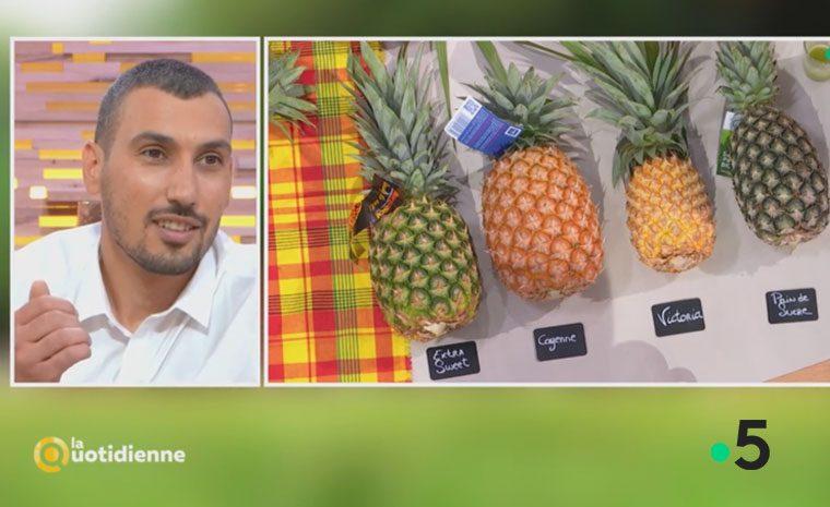 Julien Marcangeli parle de l'ananas d'Equateur sur France 5