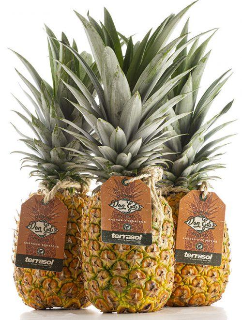 Ananas par avion Don Ed's Terrasol