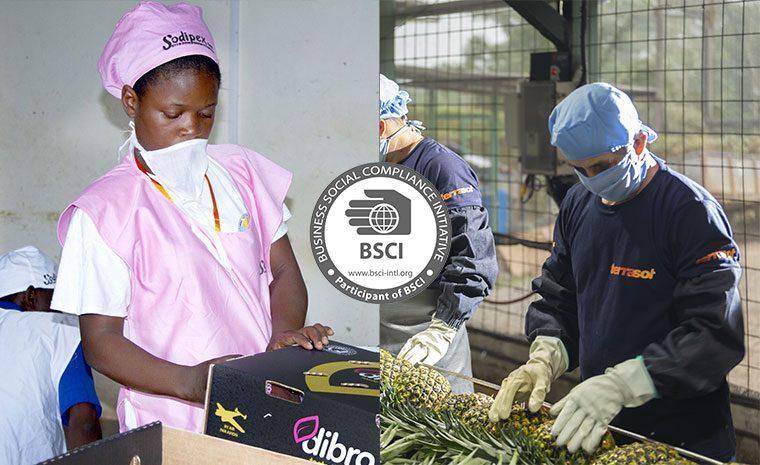 BSCI pour Sodipex et Terrasol