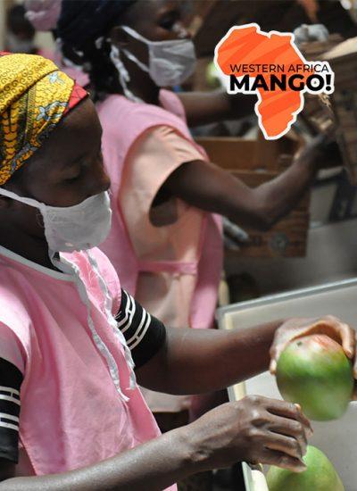 mangue_dibra_qr_code_afrique_550x692
