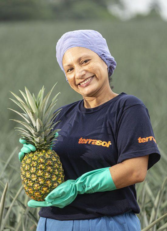 Récolte ananas Terrasol